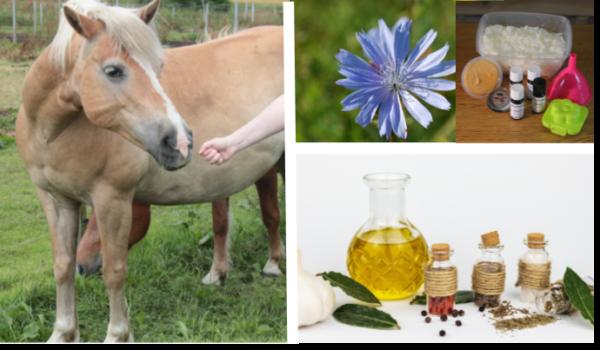 Aromatherapie voor honden & paarden cursus