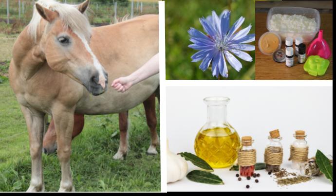 Aromatherapie voor honden & paarden