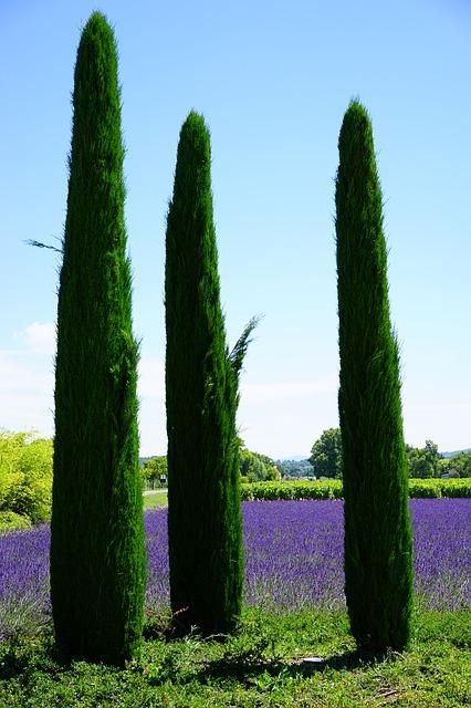cypress-1595476_640