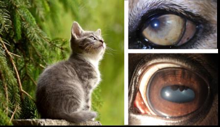 Verkorte opl. iriscopie voor dieren 1