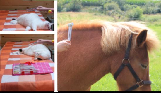 Stemvorken/Fonoforese therapie voor mens & dier op locatie 2