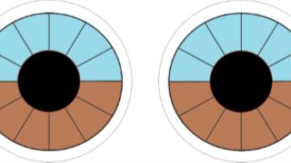 Iriscopie voor dieren opleiding: Hoofdstuk 5 iriskaarten