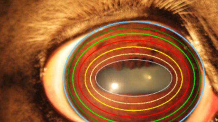 Iriscopie voor dieren opleiding: Hoofdstuk 8 zone indeling