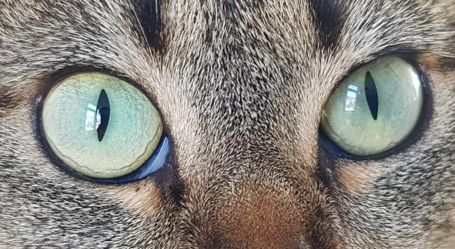 Iriscopie voor dieren opleiding: Hoofdstuk 4 diathese