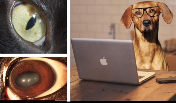 Online opleiding iriscopie voor dieren 1