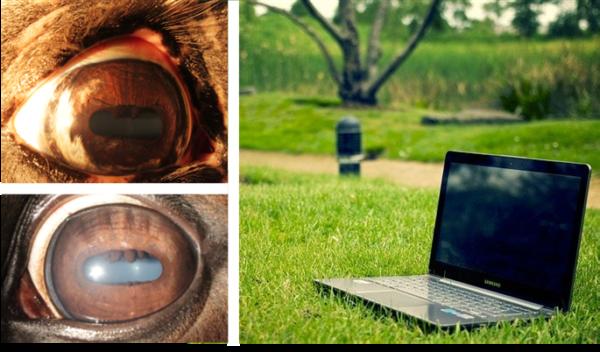 Online opleiding iriscopie voor paarden 1