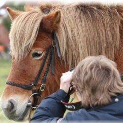Online Seminar Iridologie für Pferden, Thema Verdauung 2
