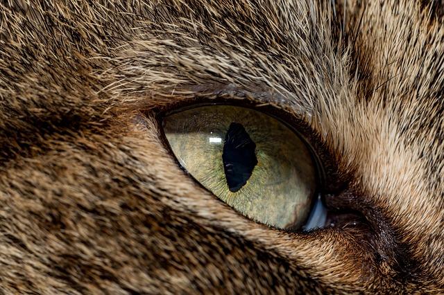 cat-4085396_640