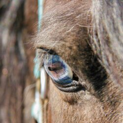 Online Seminar Iridologie für Pferden, Thema Verdauung 4