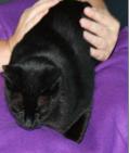 Online basiscursus healing voor mens en dier 2