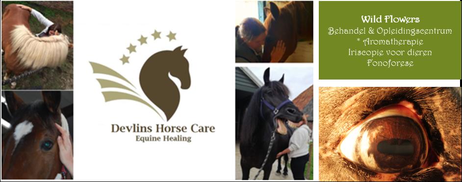 Samenwerkingspakket Iriscopie en Equine healing voor paarden 1