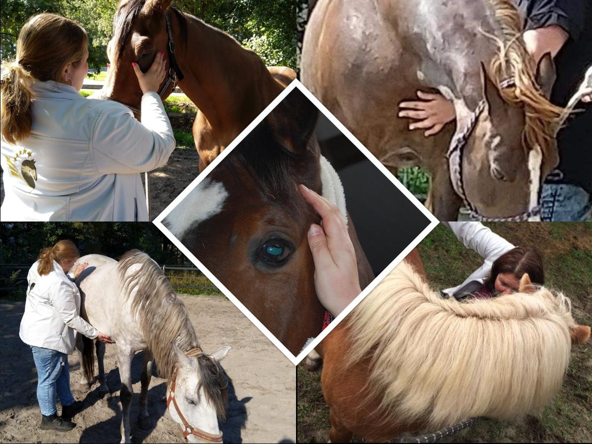 Samenwerkingspakket Iriscopie en Equine healing voor paarden 3